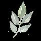 detail-leaf-grey2.png