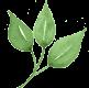 detail-leaf.png